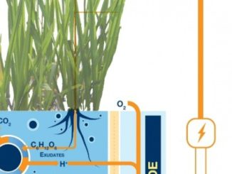 Plant-E, System for Producing Green Energy from the Earth and Plants